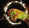 Цирки в Черемушках
